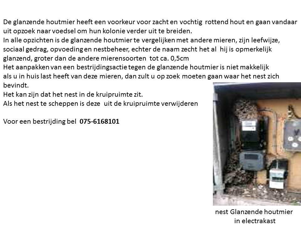 glanzende houtmier
